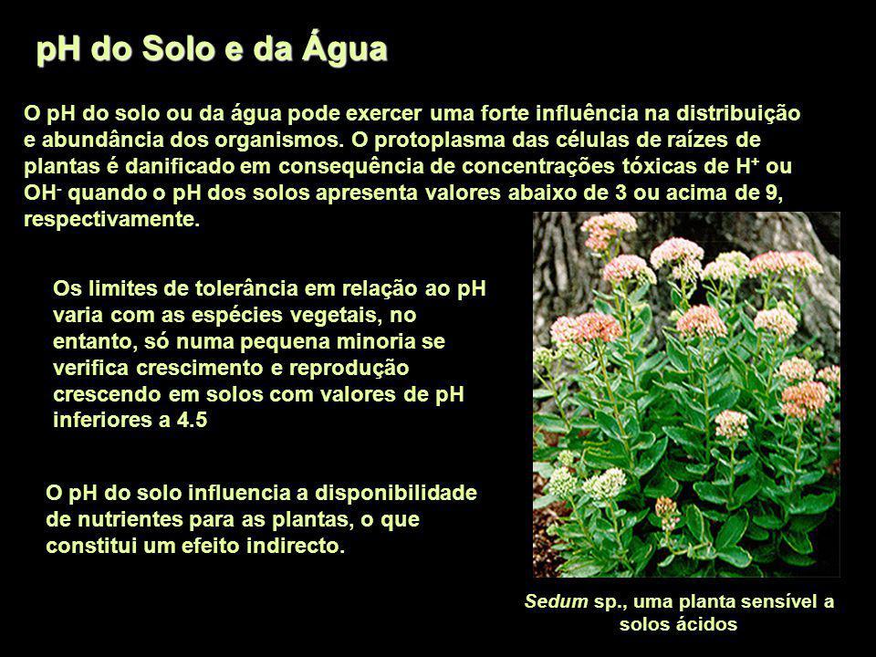 pH do Solo e da Água O pH do solo ou da água pode exercer uma forte influência na distribuição e abundância dos organismos. O protoplasma das células
