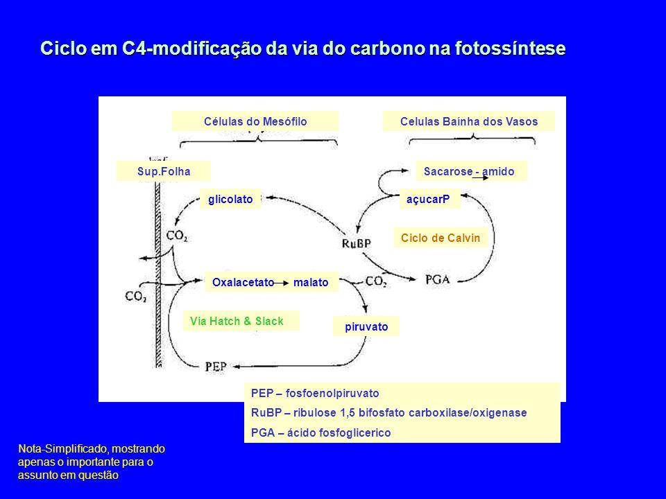 Metabolismo Ácido das Crassulaceae Noite – estomas abertos acidez elevada Dia – estomas fechados acidez baixa.