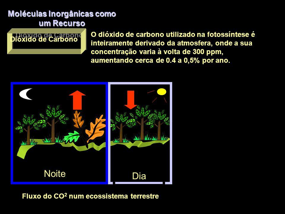 Moléculas Inorgânicas como um Recurso Água O solo funciona como um reservatório.