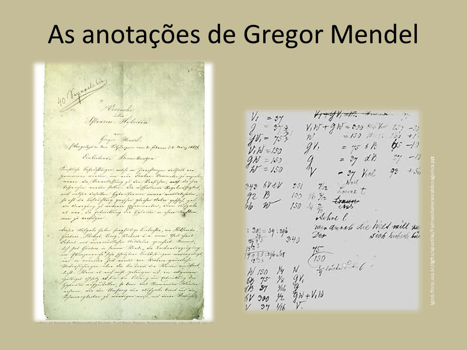 lgmb.fmrp.usp.br/dgfto/apostilas/PadroesdeHerancaMonogenica.ppt As anotações de Gregor Mendel