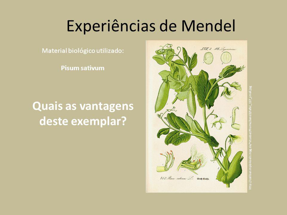 Material biológico utilizado: Pisum sativum Quais as vantagens deste exemplar.