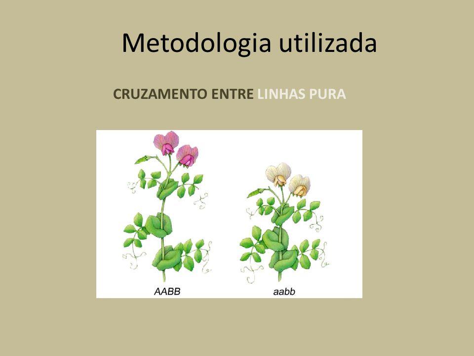 CRUZAMENTO ENTRE LINHAS PURA Metodologia utilizada