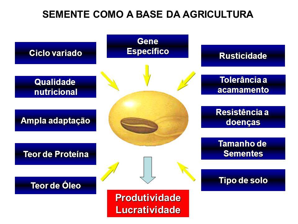Ciclo variado Qualidadenutricional Teor de Proteína Teor de Óleo Ampla adaptação Tipo de solo Tolerância a acamamento Resistência a doençasRusticidade Tamanho de Sementes ProdutividadeLucratividade GeneEspecífico SEMENTE COMO A BASE DA AGRICULTURA