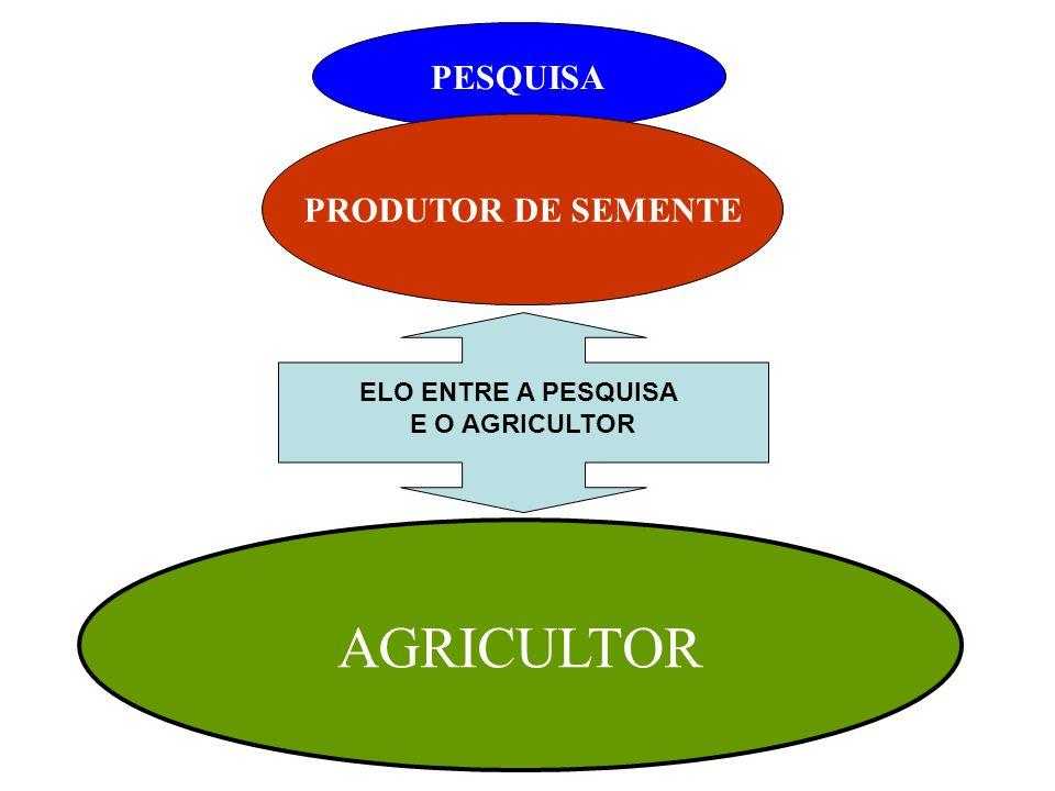 PRODUTOR DE SEMENTE AGRICULTOR PESQUISA ELO ENTRE A PESQUISA E O AGRICULTOR