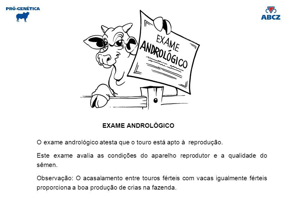 EXAME ANDROLÓGICO O exame andrológico atesta que o touro está apto à reprodução. Este exame avalia as condições do aparelho reprodutor e a qualidade d