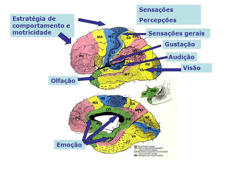 Sensações Percepções Estratégia de comportamento e motricidade Emoção Olfação Visão Audição Gustação Sensações gerais