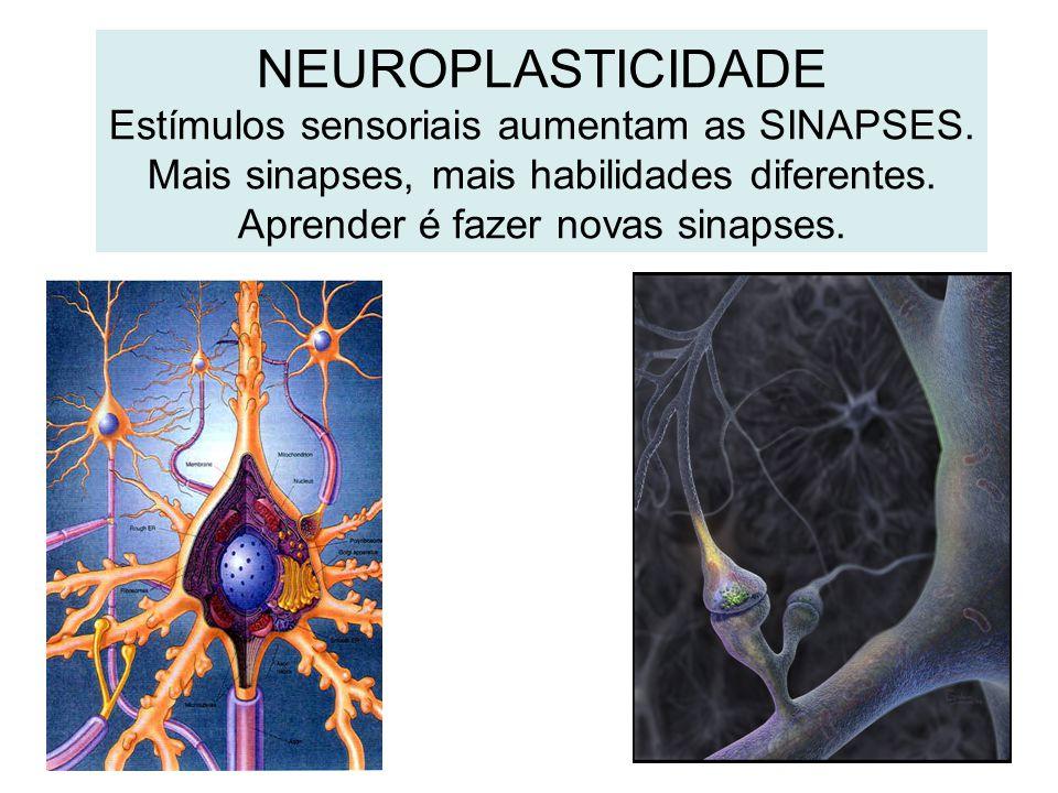 NEUROPLASTICIDADE Estímulos sensoriais aumentam as SINAPSES. Mais sinapses, mais habilidades diferentes. Aprender é fazer novas sinapses.