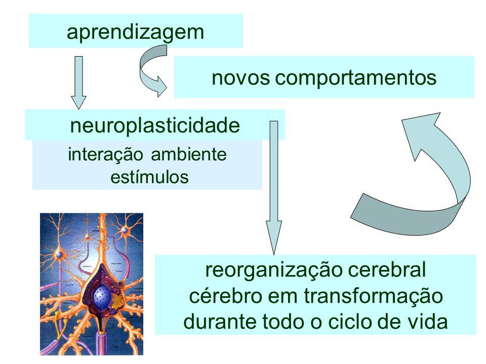 aprendizagem reorganização cerebral cérebro em transformação durante todo o ciclo de vida novos comportamentos neuroplasticidade interação ambiente es