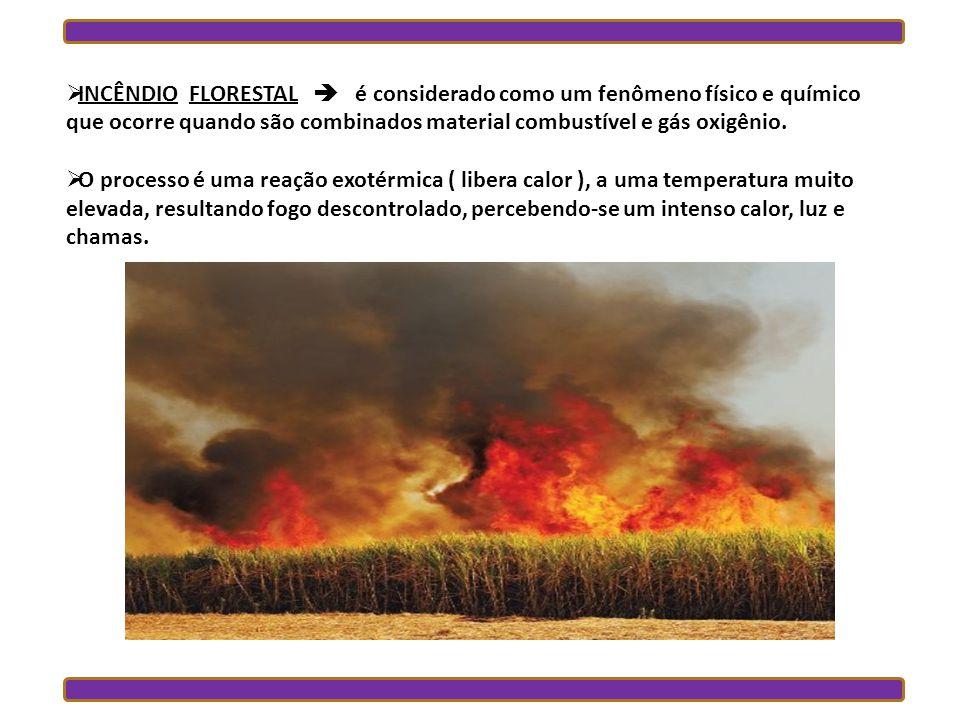 INCÊNDIO FLORESTAL é considerado como um fenômeno físico e químico que ocorre quando são combinados material combustível e gás oxigênio.