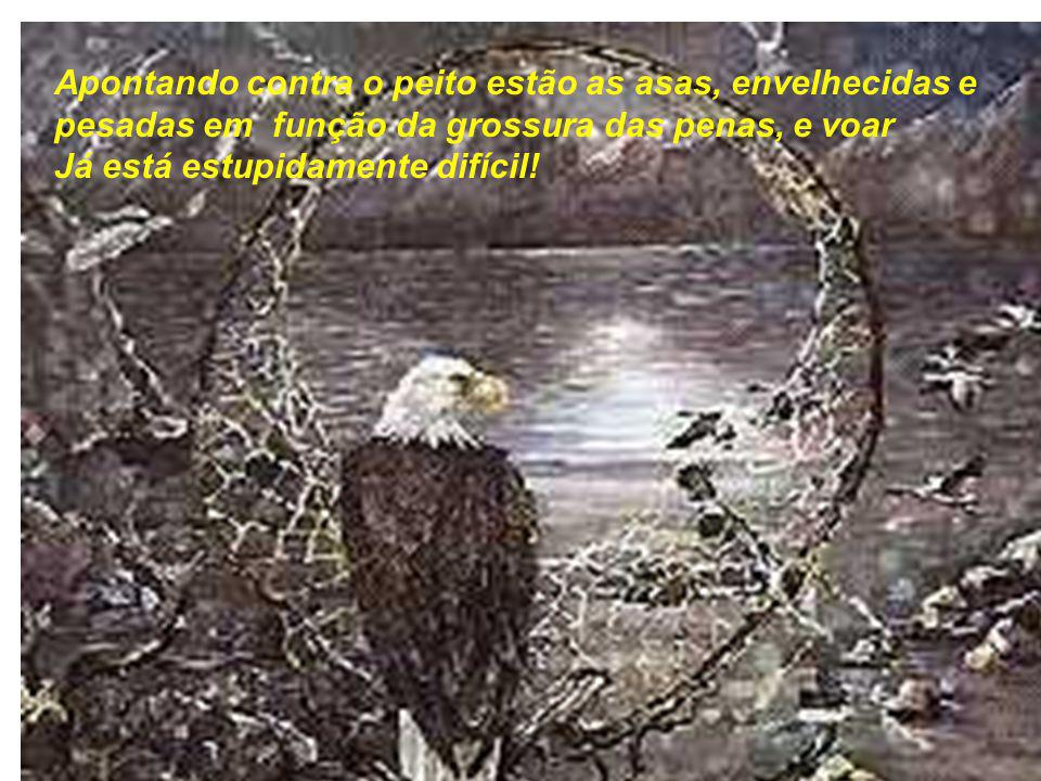Apontando contra o peito estão as asas, envelhecidas e pesadas em função da grossura das penas, e voar Já está estupidamente difícil!