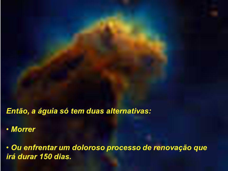 Então, a águia só tem duas alternativas: Morrer Ou enfrentar um doloroso processo de renovação que irá durar 150 dias.