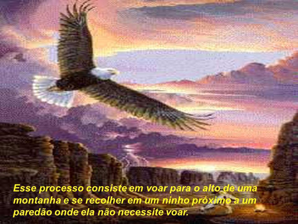 Esse processo consiste em voar para o alto de uma montanha e se recolher em um ninho próximo a um paredão onde ela não necessite voar.
