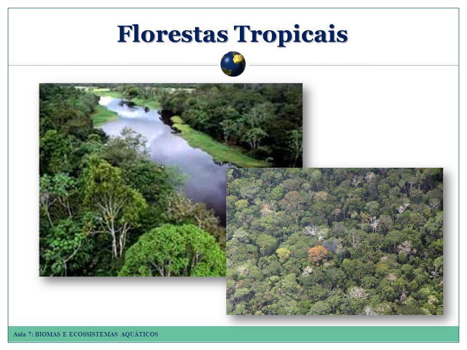 Aula 7: BIOMAS E ECOSSISTEMAS AQUÁTICOS Florestas Tropicais