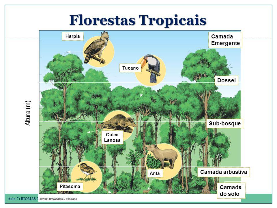 Aula 7: BIOMAS E ECOSSISTEMAS AQUÁTICOS Florestas Tropicais Harpia Tucano Cuíca Lanosa Anta Pitasoma Camada arbustiva Dossel Camada Emergente Sub-bosque Camada do solo Altura (m)