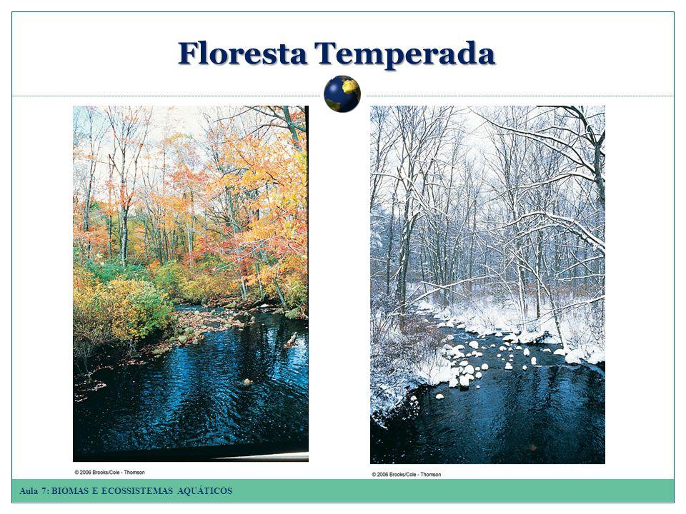 Aula 7: BIOMAS E ECOSSISTEMAS AQUÁTICOS Floresta Temperada