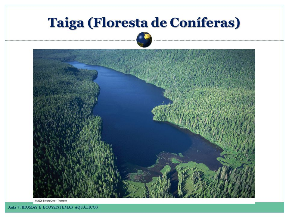 Aula 7: BIOMAS E ECOSSISTEMAS AQUÁTICOS Taiga (Floresta de Coníferas)