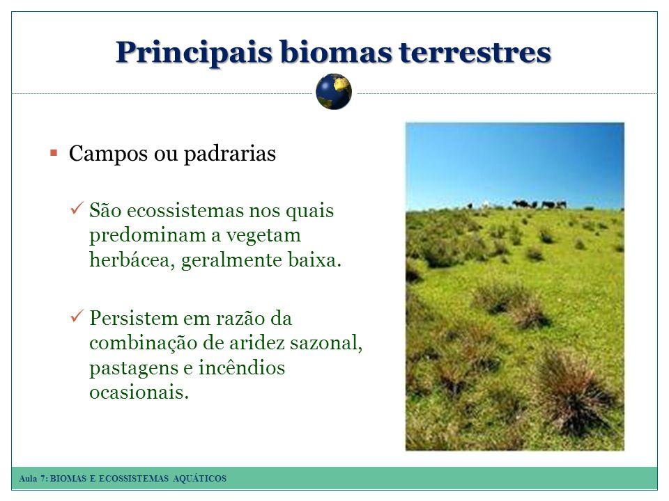 Aula 7: BIOMAS E ECOSSISTEMAS AQUÁTICOS Principais biomas terrestres Campos ou padrarias São ecossistemas nos quais predominam a vegetam herbácea, geralmente baixa.