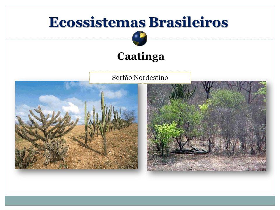 Caatinga Sertão Nordestino Ecossistemas Brasileiros