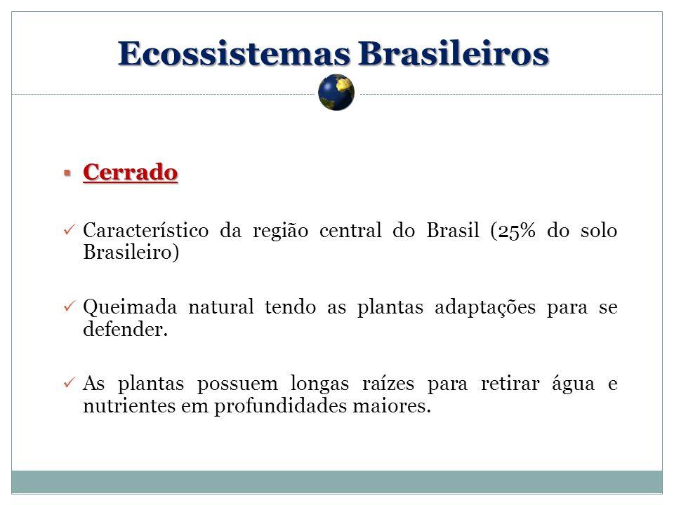 Cerrado Cerrado Característico da região central do Brasil (25% do solo Brasileiro) Queimada natural tendo as plantas adaptações para se defender.