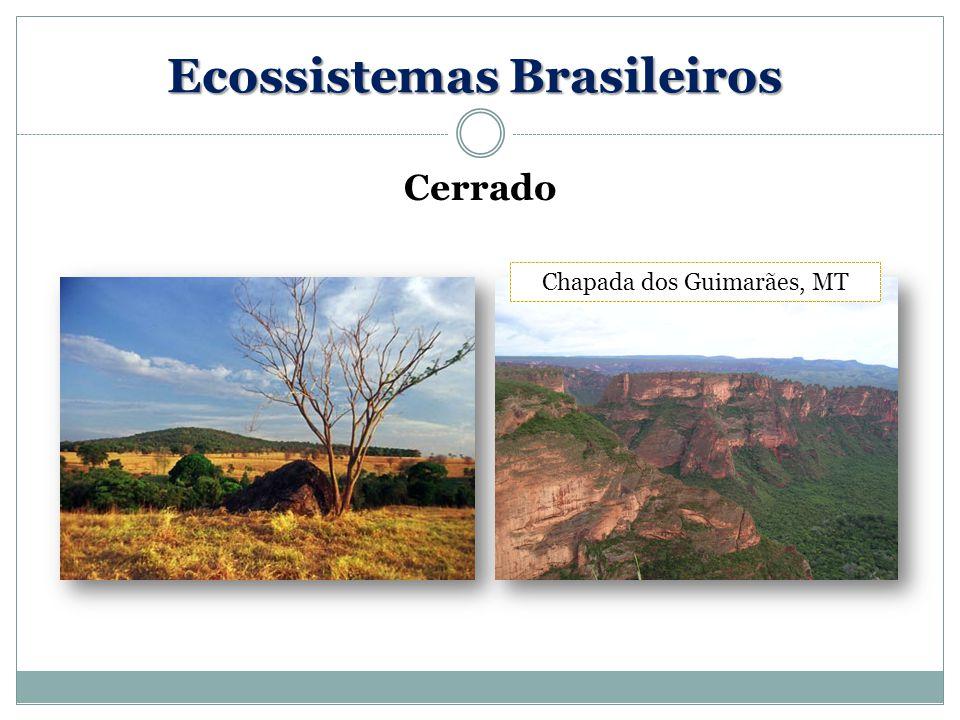 Cerrado Chapada dos Guimarães, MT Ecossistemas Brasileiros