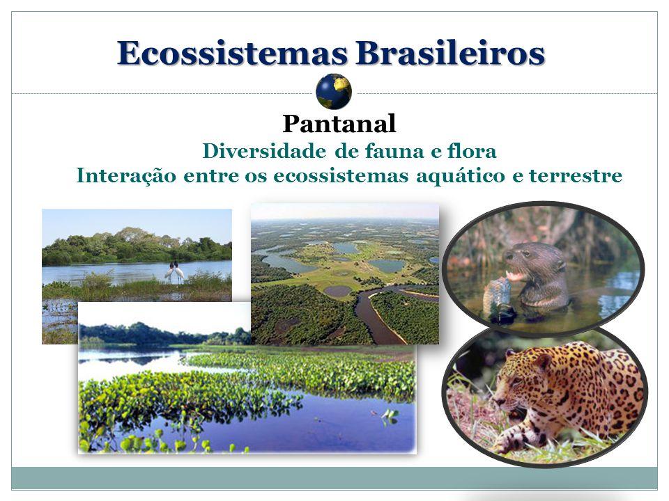 Pantanal Diversidade de fauna e flora Interação entre os ecossistemas aquático e terrestre Ecossistemas Brasileiros