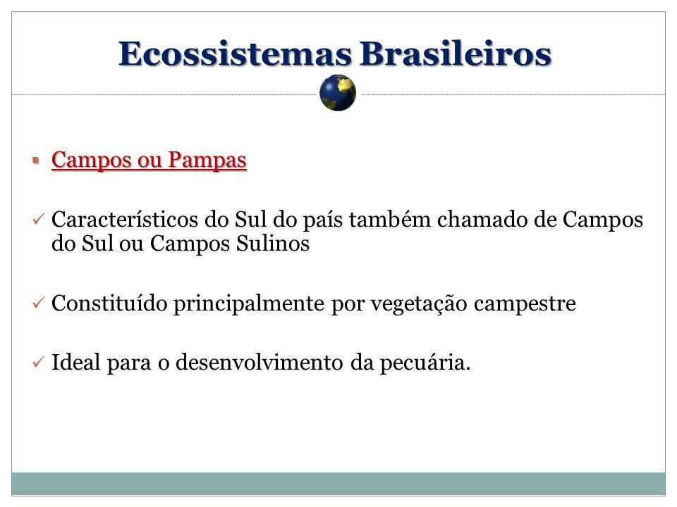 Campos ou Pampas Campos ou Pampas Característicos do Sul do país também chamado de Campos do Sul ou Campos Sulinos Constituído principalmente por vegetação campestre Ideal para o desenvolvimento da pecuária.