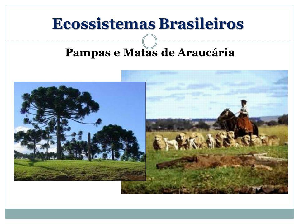 Pampas e Matas de Araucária Ecossistemas Brasileiros