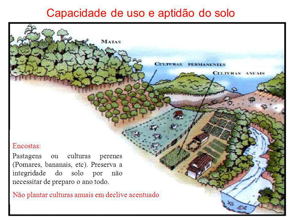 Capacidade de uso e aptidão do solo Encostas: Pastagens ou culturas perenes (Pomares, bananais, etc). Preserva a integridade do solo por não necessita