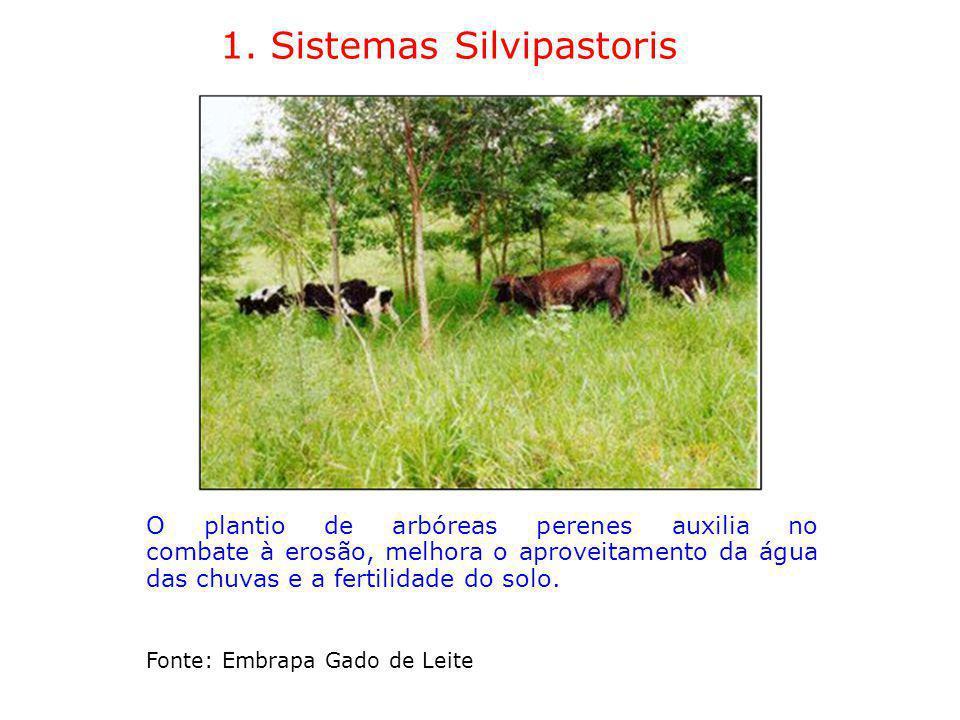 1. Sistemas Silvipastoris O plantio de arbóreas perenes auxilia no combate à erosão, melhora o aproveitamento da água das chuvas e a fertilidade do so
