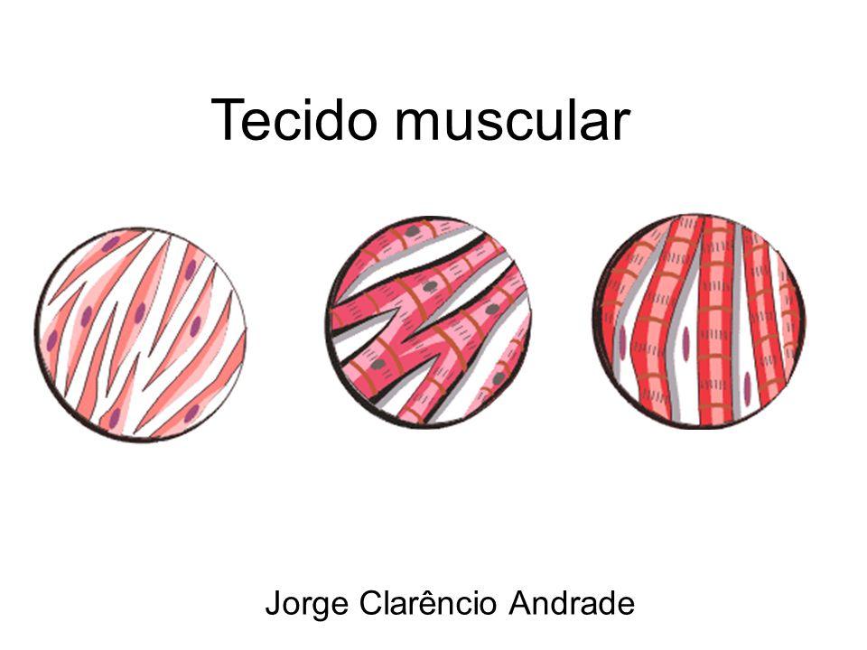 Jorge Clarêncio Andrade Tecido muscular