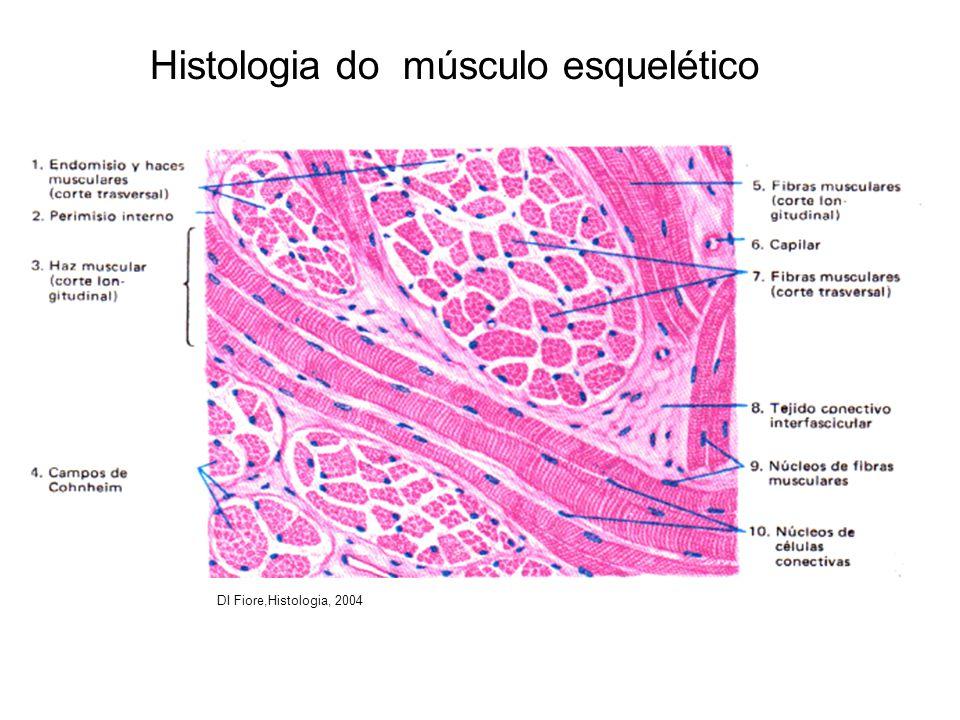 Histologia do músculo esquelético DI Fiore,Histologia, 2004