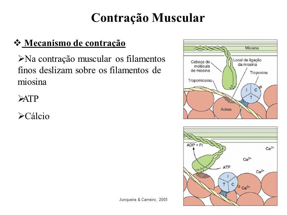 Contração Muscular Na contração muscular os filamentos finos deslizam sobre os filamentos de miosina ATP Cálcio Mecanismo de contração Junqueira & Car