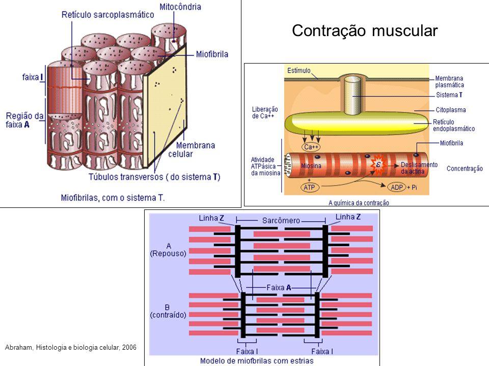 Contração muscular Abraham, Histologia e biologia celular, 2006