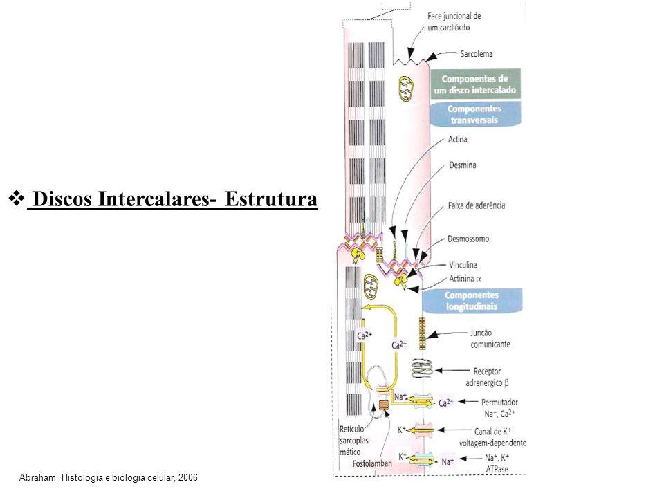 Discos Intercalares- Estrutura Abraham, Histologia e biologia celular, 2006