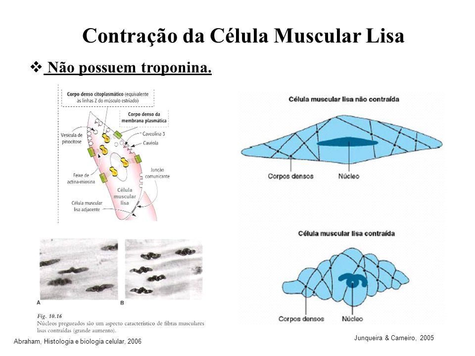 Contração da Célula Muscular Lisa Não possuem troponina. Junqueira & Carneiro, 2005 Abraham, Histologia e biologia celular, 2006