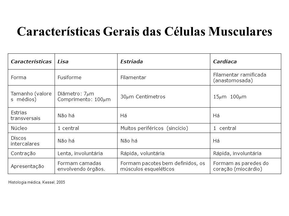 Características Gerais das Células Musculares Histologia médica, Kessel, 2005 CaracterísticasLisaEstriadaCardíaca FormaFusiformeFilamentar Filamentar