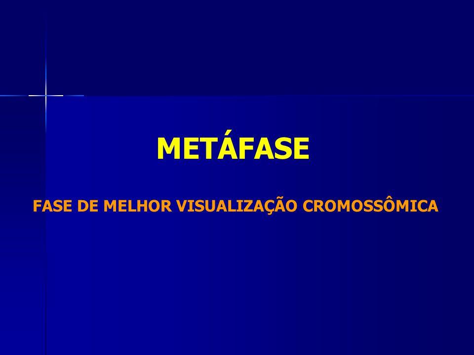 METÁFASE FASE DE MELHOR VISUALIZAÇÃO CROMOSSÔMICA