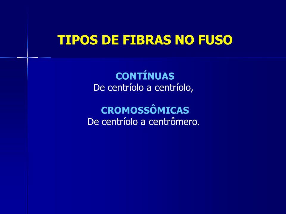 TIPOS DE FIBRAS NO FUSO CONTÍNUAS De centríolo a centríolo, CROMOSSÔMICAS De centríolo a centrômero.