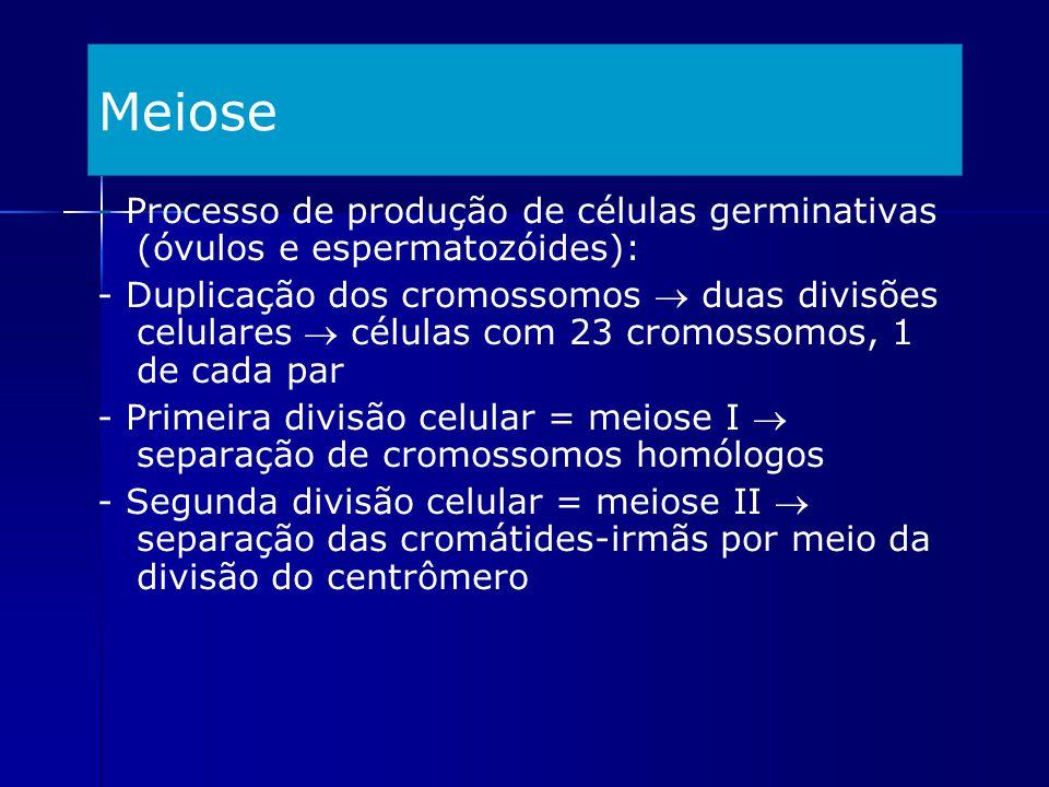 Meiose - Processo de produção de células germinativas (óvulos e espermatozóides): - Duplicação dos cromossomos duas divisões celulares células com 23