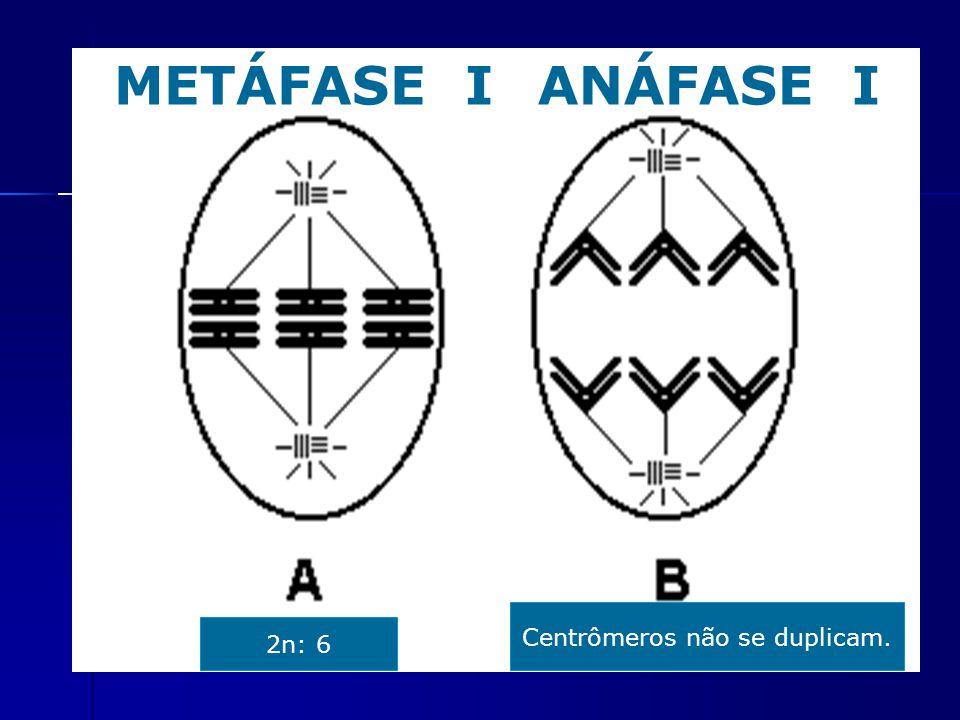 METÁFASE IANÁFASE I 2n: 6 Centrômeros não se duplicam.