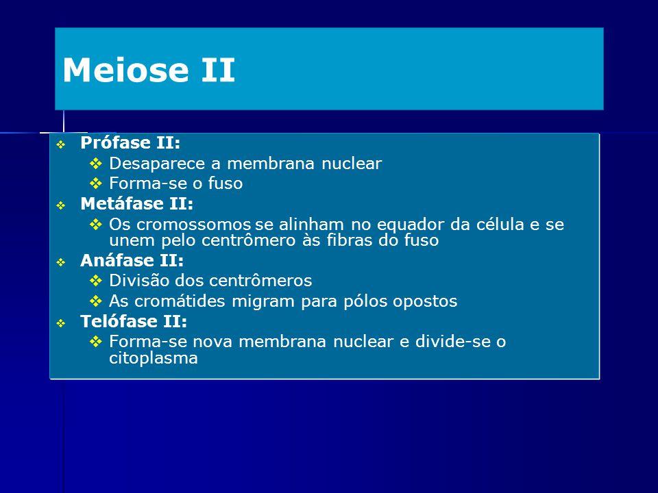 Meiose II Prófase II: Desaparece a membrana nuclear Forma-se o fuso Metáfase II: Os cromossomos se alinham no equador da célula e se unem pelo centrôm