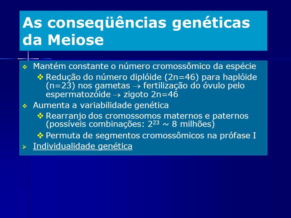 As conseqüências genéticas da Meiose Mantém constante o número cromossômico da espécie Redução do número diplóide (2n=46) para haplóide (n=23) nos gam