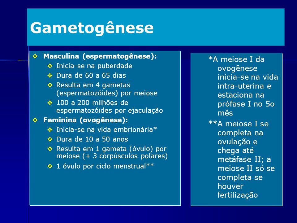 Gametogênese *A meiose I da ovogênese inicia-se na vida intra-uterina e estaciona na prófase I no 5o mês **A meiose I se completa na ovulação e chega