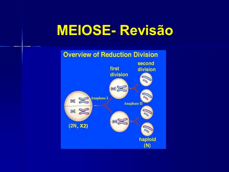 MEIOSE- Revisão