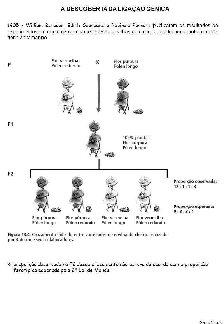 Genes Ligados A DESCOBERTA DA LIGAÇÃO GÊNICA 1905 - William Bateson, Edith Saunders e Reginald Punnett publicaram os resultados de experimentos em que