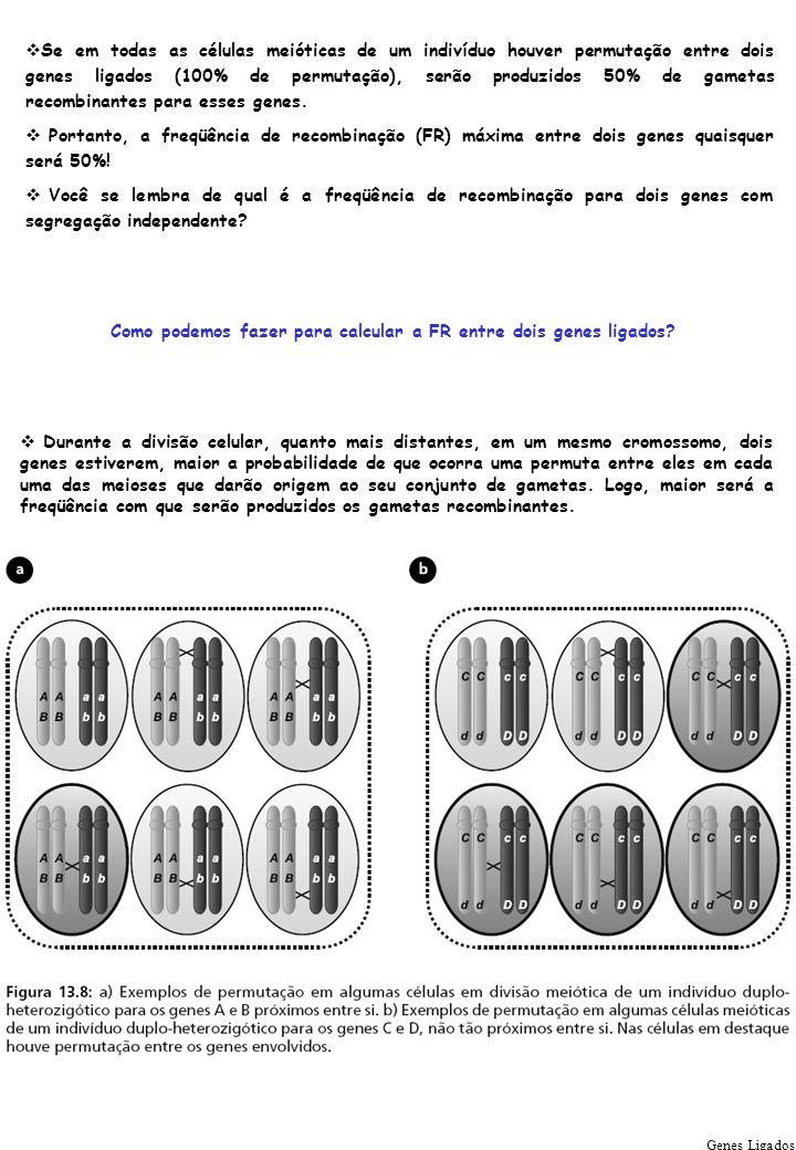 Genes Ligados Se em todas as células meióticas de um indivíduo houver permutação entre dois genes ligados (100% de permutação), serão produzidos 50% d