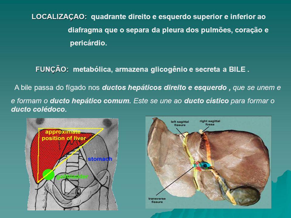 FIGADO MAIOR ÓRGÃO LINFÁTICO Superficiais : cápsula fibrosa subperitoneal ( cápsula de Glisson) Profundos : tecido de conexão que acompanha as ramificações da tríade portal e veias hepáticas Vasos Linfáticos superficiais e porfundos Linfonodos Hepáticos Linfonodos Celíacos Cisterna Quilo Vasos Linfáticos superficiais Linfonodos frênicos Linfonodos mediastinais posteriores