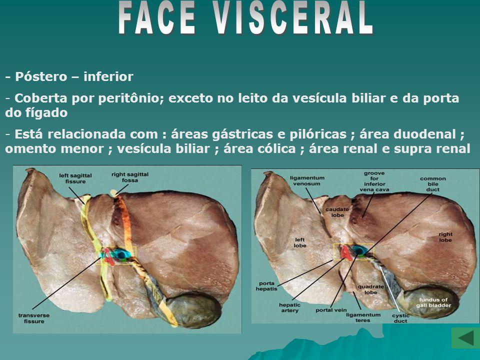 -Anterior, superior e um pouco posterior - Lisa e côncava relacionando-se com a face inferior do diafragma através do RECESSO SUBFRÊNICO.
