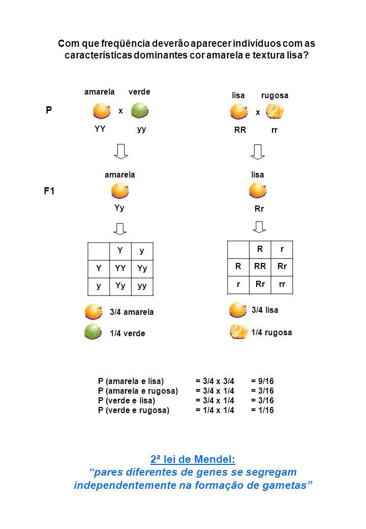 Condições propostas por Mendel 1.