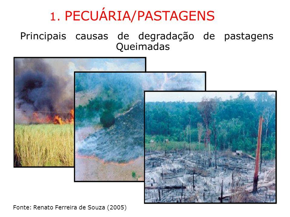 1. PECUÁRIA/PASTAGENS Principais causas de degradação de pastagens Queimadas Fonte: Renato Ferreira de Souza (2005)